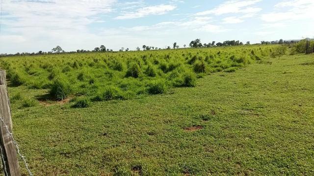 Fazenda 1.000 Hectares Grande Oportunidade - Itiquira - MT - Foto 3