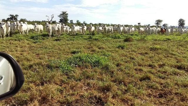 Fazenda 1.000 Hectares Grande Oportunidade - Itiquira - MT - Foto 7