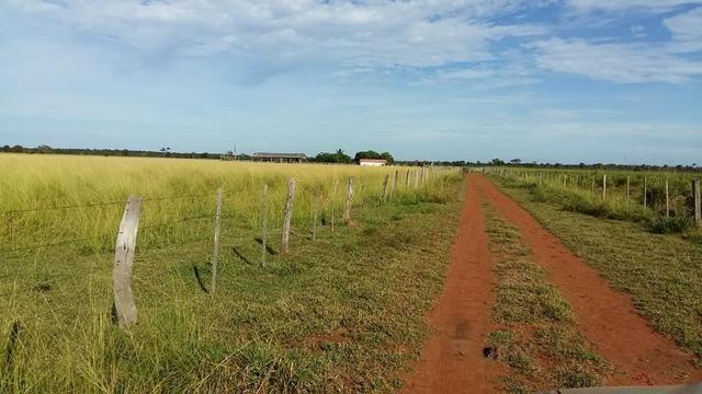 Fazenda 1.000 Hectares Grande Oportunidade - Itiquira - MT - Foto 4