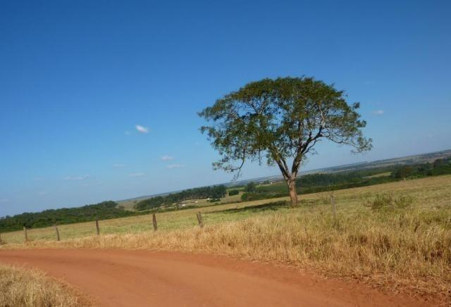 Fazenda interior de Canarana-MT 75Hectares - Foto 2