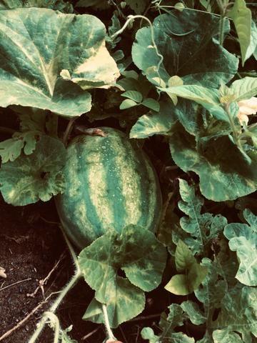 Fazenda no Vale do Jequiriçá - Foto 10