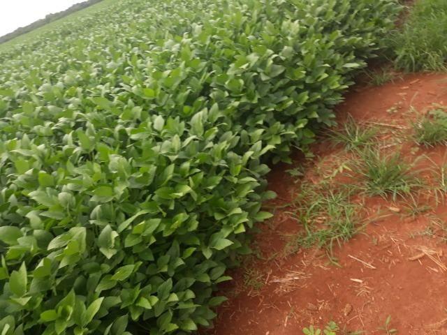Fazenda 1.020 Hectares Plantando Lavoura - MT - Foto 6