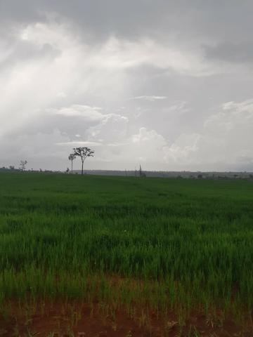 Fazenda 1.210 Hectares Para Lavoura - Colider - MT - Foto 3