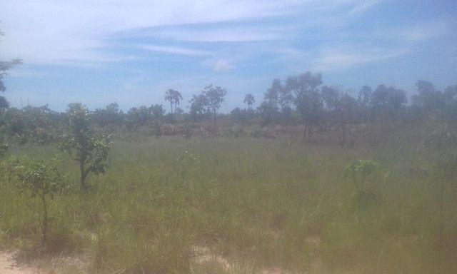 Fazenda Sabiá Dourado - Lizarda/TO - Lavoura e Pecuária - Foto 7