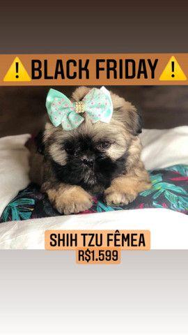 *BLACK FRIDAY* Shih Tzu Fêmea belíssima - Foto 3