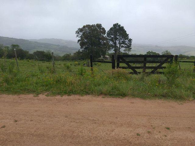 Chacara 14 hectares