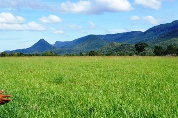 Fazenda 1750 ha N.S. Livramento MT - Foto 5