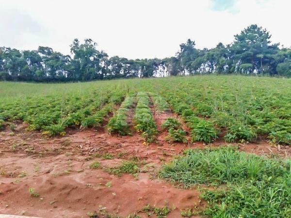 Chácara à venda em Área rural, Mandirituba cod:150401 - Foto 12