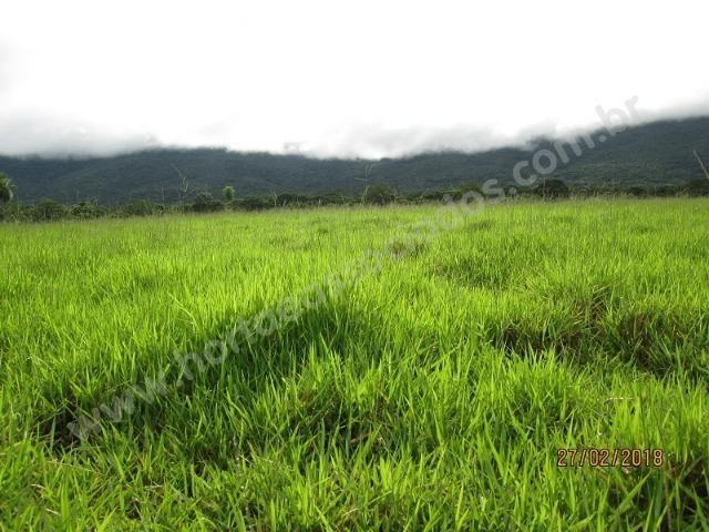 Fazenda com 881 hectares em Corumbá-MS para agricultura e pecuária - Foto 13