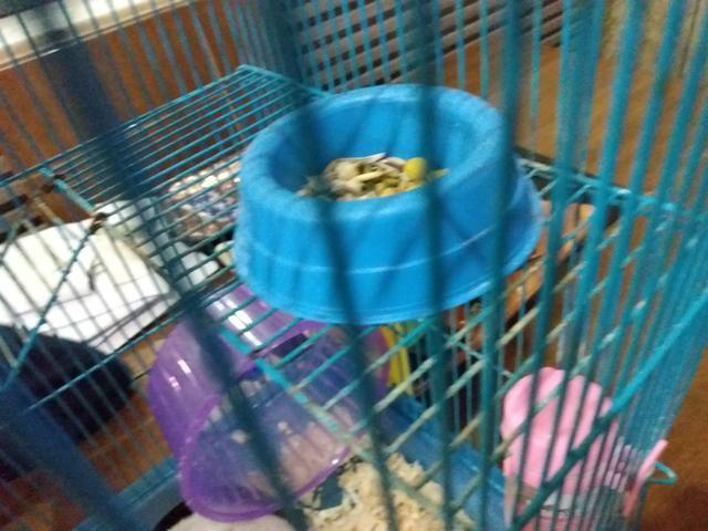Vendo hamster com gaiola e tudo 120 R$ entrego - Foto 5