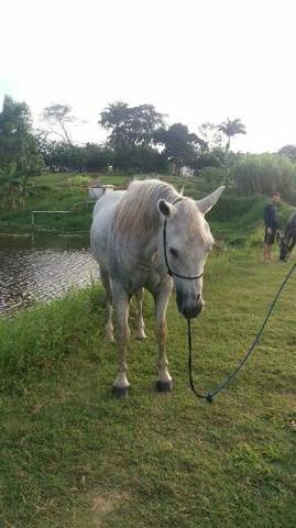 Cavalo de direita pra textar - Foto 2