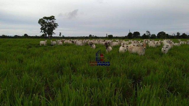 Fazenda à venda por R$ 9.234.000,00 - Zona Rural - Alta Floresta D'Oeste/RO - Foto 5