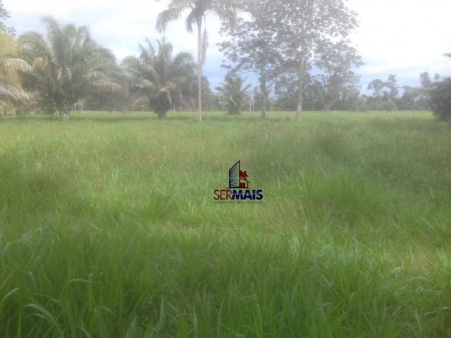 Sítio à venda, 110 alqueires com 70 alq. formado por R$ 4.400.000 - Zona Rural - São Franc - Foto 4