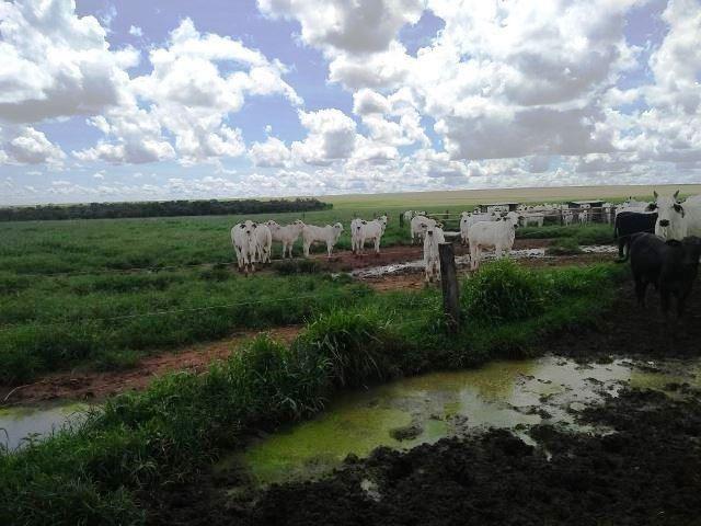 Fazenda 7900 ha Alta Floresta MT - Foto 2
