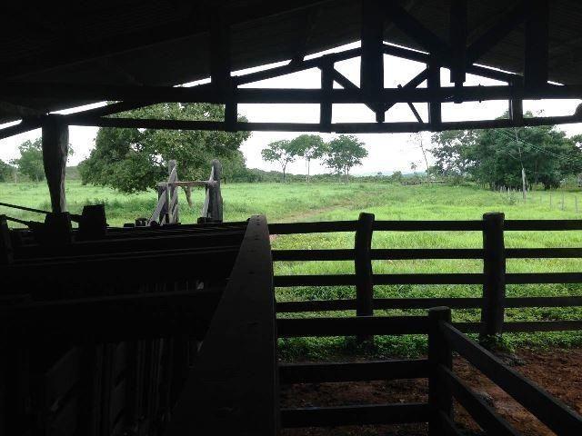 Fazenda 950 ha Rosário Oeste MT - Foto 6