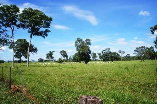 Fazenda 1750 ha N.S. Livramento MT - Foto 9