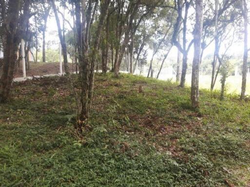 São José dos Pinhais - Chácara c/ 2328m² em condomínio fechado próx. BR 277 - Foto 9