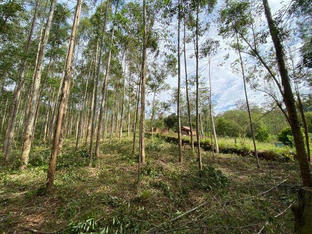 Sitio de 1 hectare em Padilha, barbada do dia - Foto 2
