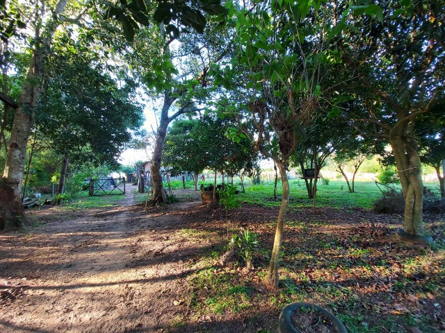 Velleda oferece belíssimo sítio 1 hectare todo arborizado, ideal para lazer - Foto 19