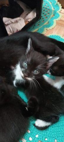 Filhotes para adoção  - Foto 3