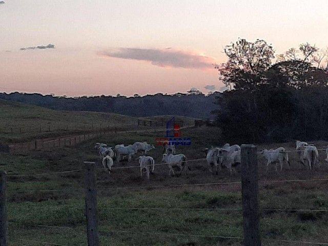 Fazenda à venda, por R$ 7.900.000 - Centro - Alta Floresta D'Oeste/RO