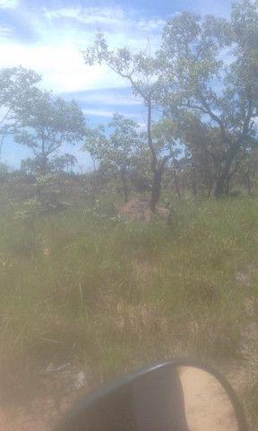 Fazenda Sabiá Dourado - Lizarda/TO - Lavoura e Pecuária - Foto 3