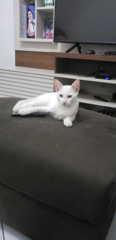 Gatinhos, adoção responsável - Foto 3