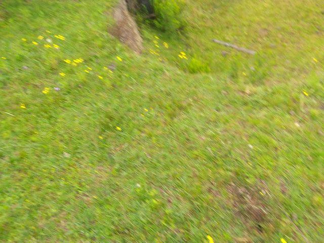 Chacara 14 hectares  - Foto 3