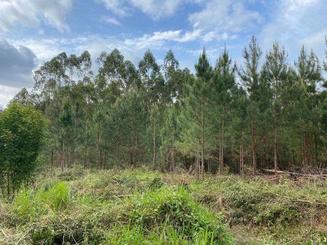Sitio de 1 hectare em Padilha, barbada do dia