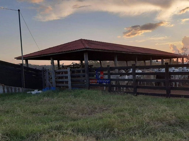 Fazenda à venda, por R$ 7.900.000 - Centro - Alta Floresta D'Oeste/RO - Foto 11