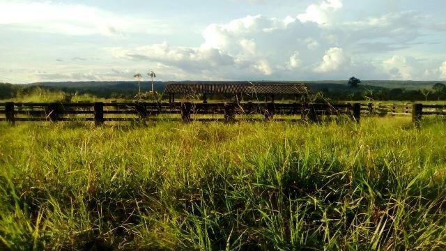 Fazenda 7900 ha Alta Floresta MT - Foto 6