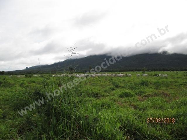 Fazenda com 881 hectares em Corumbá-MS para agricultura e pecuária - Foto 6