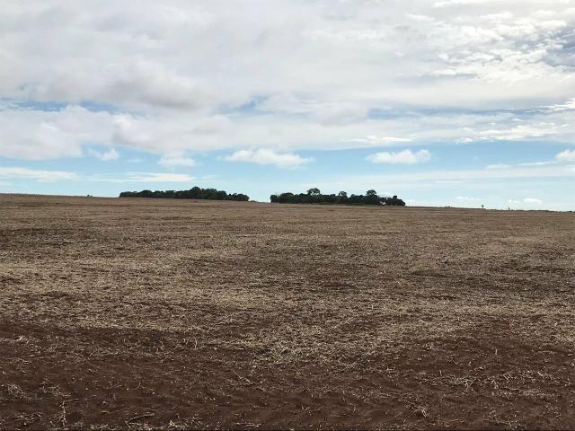 Fazenda para Arrendamento - MS - Foto 5