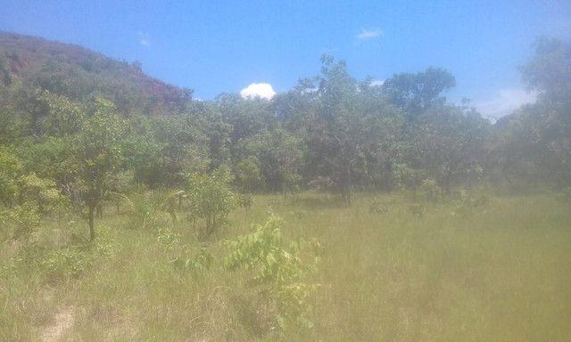 Fazenda Sabiá Dourado - Lizarda/TO - Lavoura e Pecuária - Foto 4