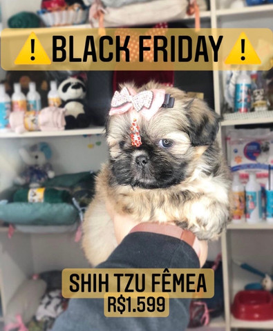 *BLACK FRIDAY* Shih Tzu Fêmea belíssima - Foto 4