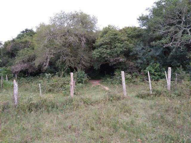 Velleda oferece sitio de 2 ha escriturado com casa e galpão, 1 km da RS040 - Foto 13