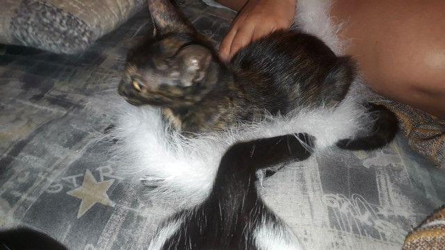 Gatos - Foto 6