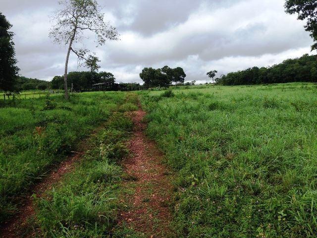 Fazenda 950 ha Rosário Oeste MT - Foto 7