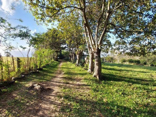 Velleda oferece belíssimo sítio 1 hectare todo arborizado, ideal para lazer - Foto 11