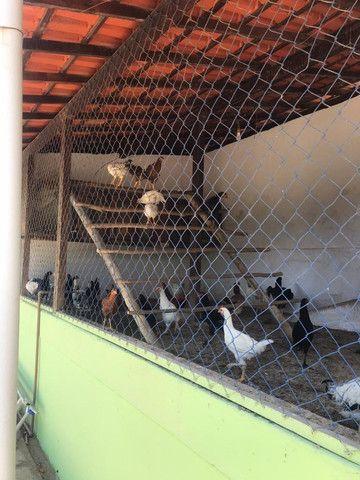Casa com várias suítes em Itaipava para confraternização de amigos e famílias - Foto 15