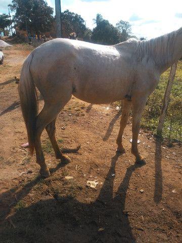 cavalo 3500