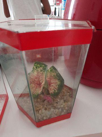 Conjunto de aquários - Foto 2