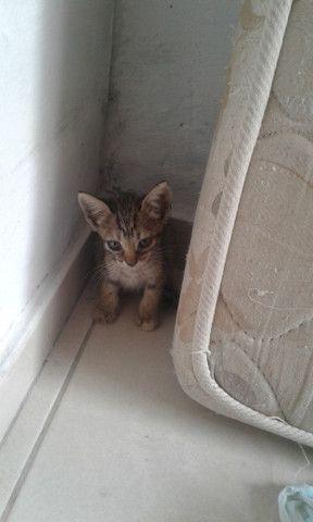 adoção de gatinhos  - Foto 3