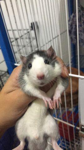 Rato Twister  - Foto 2