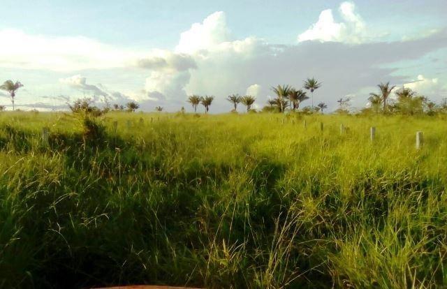 Fazenda 7900 ha Alta Floresta MT - Foto 8