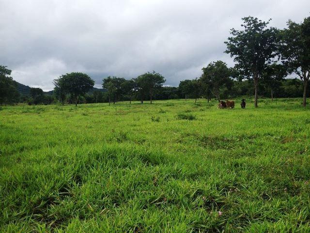 Fazenda 950 ha Rosário Oeste MT - Foto 12