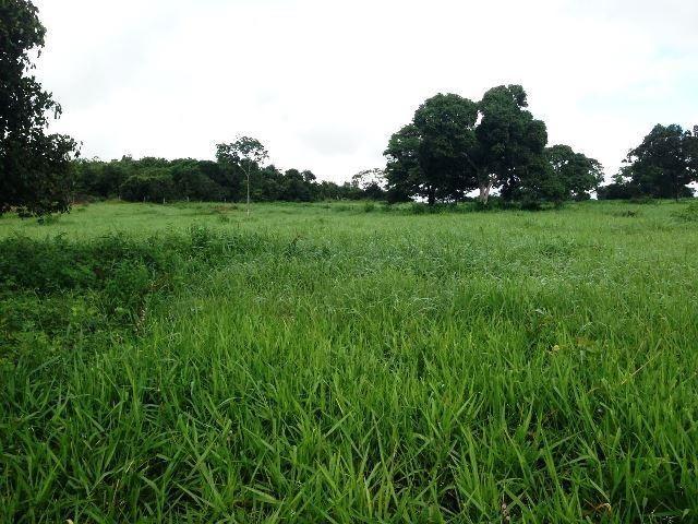 Fazenda 950 ha Rosário Oeste MT - Foto 8