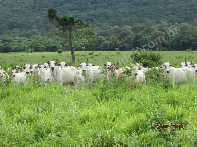 Fazenda com 881 hectares em Corumbá-MS para agricultura e pecuária - Foto 16