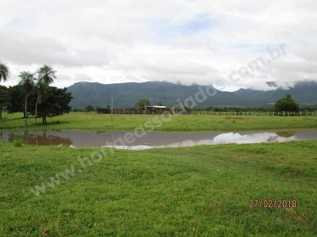 Fazenda com 881 hectares em Corumbá-MS para agricultura e pecuária - Foto 9