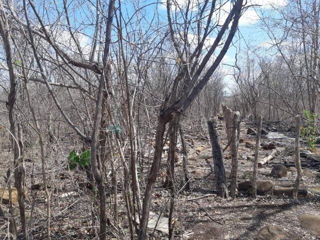 "Vendo Terreno Rural na localidade ""Tapera"" no município de Batalha - Foto 3"